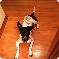 Adopt A Pet :: Jackie - Pendleton, NY