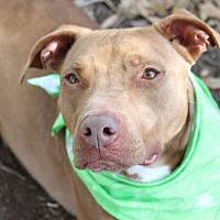 Adopt A Pet :: Camaro - Odessa, FL