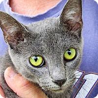 Adopt A Pet :: Kate - Germantown, MD