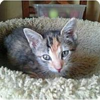Adopt A Pet :: Sweetness - Lantana, FL