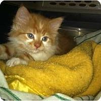 Adopt A Pet :: Suds - Clay, NY