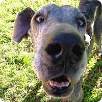 Adopt A Pet :: Nyx - Albuquerque, NM