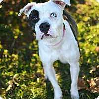 Adopt A Pet :: Queen - Springfield, IL