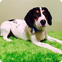Adopt A Pet :: Gidget - Russellville, KY