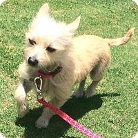 Adopt A Pet :: Charlotte - Huntington Beach, CA