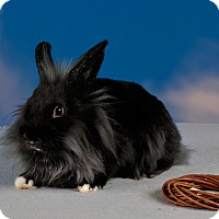 Adopt A Pet :: Farris - Marietta, GA