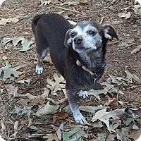 Adopt A Pet :: Coco - Greensboro, GA