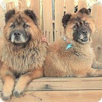 Adopt A Pet :: BURT & BERNIE - Van Nuys, CA