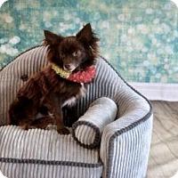 Adopt A Pet :: Skittles - Dallas, TX