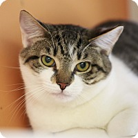 Adopt A Pet :: Curry - Kettering, OH