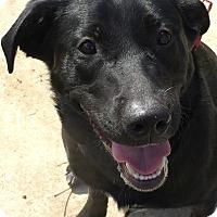 Adopt A Pet :: Buddy - Chambersburg, PA