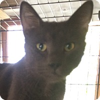 Adopt A Pet :: Les Paul - Cocoa, FL