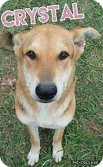 German Shepherd Dog Mix Dog for adoption in Mesa, Arizona - CRYSTAL