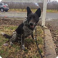 Adopt A Pet :: Pepper - Rancho Cordova, CA
