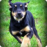 Adopt A Pet :: Annie - Glastonbury, CT