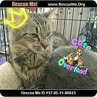 Adopt A Pet :: Loretta - Waldorf, MD
