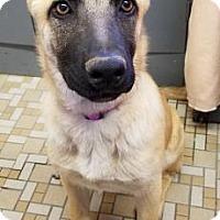 Adopt A Pet :: Gemma - Las Cruces, NM