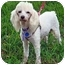 Photo 2 - Poodle (Miniature) Dog for adoption in Tallahassee, Florida - Betzee