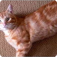 Adopt A Pet :: Skippy - Jenkintown, PA