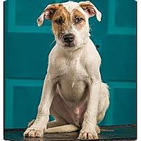 Adopt A Pet :: Spike - Owensboro, KY