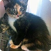 Adopt A Pet :: Laura - Secaucus, NJ