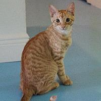 Adopt A Pet :: Nala - Thibodaux, LA