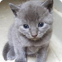 Adopt A Pet :: Daniel Boone - Willington, CT