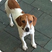 Adopt A Pet :: Donnie - Bridgewater, NJ