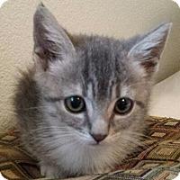 Adopt A Pet :: Phooka - North Highlands, CA