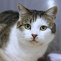 Adopt A Pet :: Pilo - Pacific Grove, CA