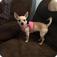 Adopt A Pet :: Tink - Yuba City, CA