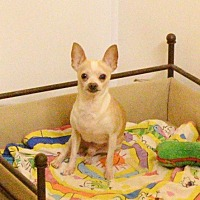 Adopt A Pet :: Toybox - Virginia Beach, VA