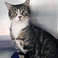 Adopt A Pet :: Clover - Paris, ME