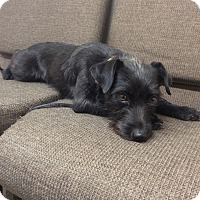 Adopt A Pet :: Annabel - Bend, OR