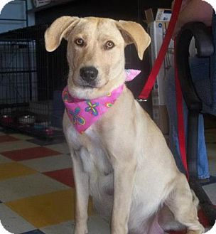 Labrador Retriever Mix Dog for adoption in Huntsville, Alabama - Emma