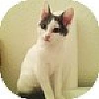 Adopt A Pet :: Holli - Vancouver, BC