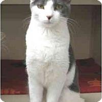 Adopt A Pet :: Emily and Jane - Mesa, AZ