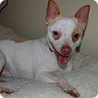 Adopt A Pet :: Paco - Douglas, ON