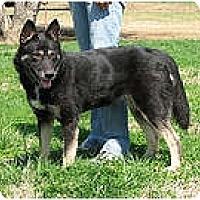 Adopt A Pet :: Karma - Antioch, IL