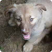 Adopt A Pet :: Brenda - New Boston, NH