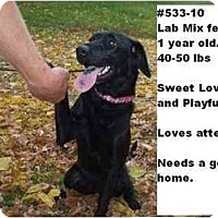 Adopt A Pet :: # 533-10 - ADOPTED! - Zanesville, OH