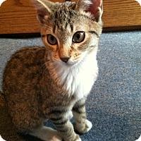 Adopt A Pet :: Lovey - Riverhead, NY
