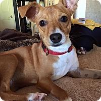 Adopt A Pet :: RUBY - Higley, AZ