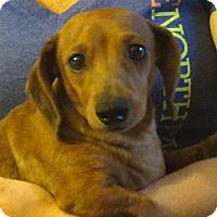 Adopt A Pet :: Alice - Salem, NH
