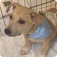 Adopt A Pet :: Kate - Marlton, NJ