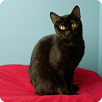 Adopt A Pet :: Candy Cane - Columbia, IL