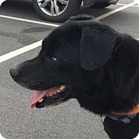 Adopt A Pet :: Ian - Albemarle, NC