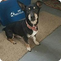 Adopt A Pet :: Jack - Port Huron, MI