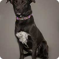 Adopt A Pet :: Lydia - Waynesboro, PA