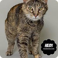 Adopt A Pet :: Heidi (special case) - Wyandotte, MI